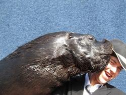 Ein starkes Duo – Seelöwe Roger und Tiertrainer Patrick Burke