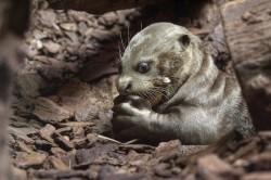 Spielbank-Spende für die geselligen Riesenotter, die eine Körperlänge bis zu 2 Meter erreichen können. (Foto: Zoo Duisburg)