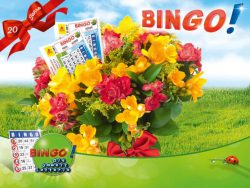 bingo de sonderauslosung