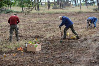Pflanzung der ersten Roteichen auf der Fläche in Randau/Magdeburg. Weitere 8.000 folgen noch bis Jahresende.
