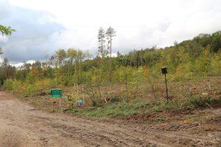 Die rund ein Hektar große und stark geschädigte Waldfläche in der Dölauer Heide muss für die Bepflanzung noch vorbereitet werden, ehe dort im Frühjahr 2021 die restlichen 8.000 Traubeneichen gepflanzt werden können.