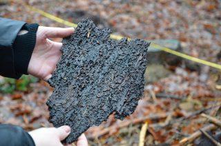 Nachdem viele Bäume in deutschen Wäldern stark von den Hitzesommern geschädigt wurden, sind sie danach vom Borkenkäfer befallen worden und mussten gerodet werden.