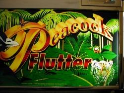 Peacock Flutter